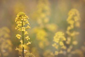 flower-1405912